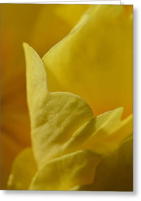 Primroses Greeting Cards - Layered In Yellow Greeting Card by Donna Blackhall
