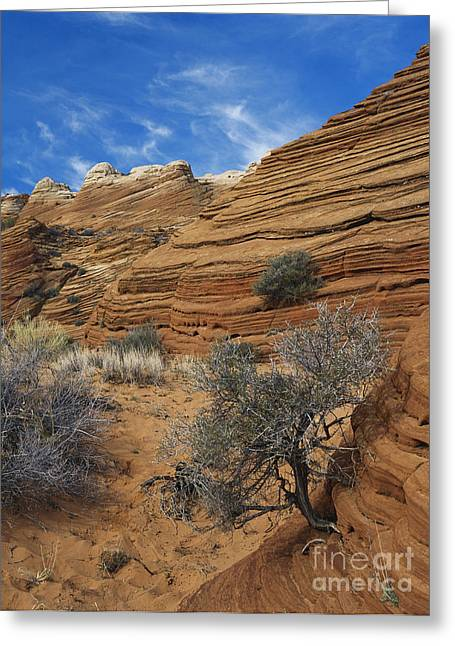 Sandstone Formation Greeting Cards - Layered Sandstone Greeting Card by David Davis