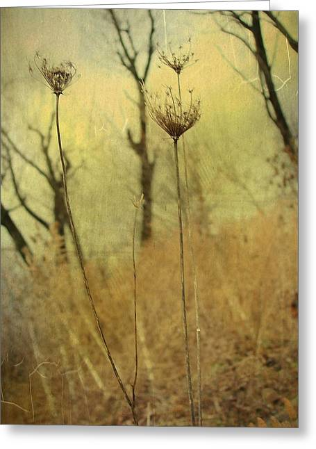Autumn Photographs Digital Art Greeting Cards - Layers Of Autumn Greeting Card by Gothicolors Donna Snyder