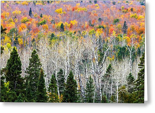 Layer Greeting Cards - Layers of Autumn Greeting Card by Mary Amerman