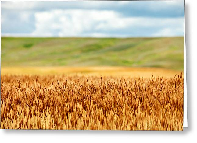 Layers Of Grain Greeting Card by Todd Klassy