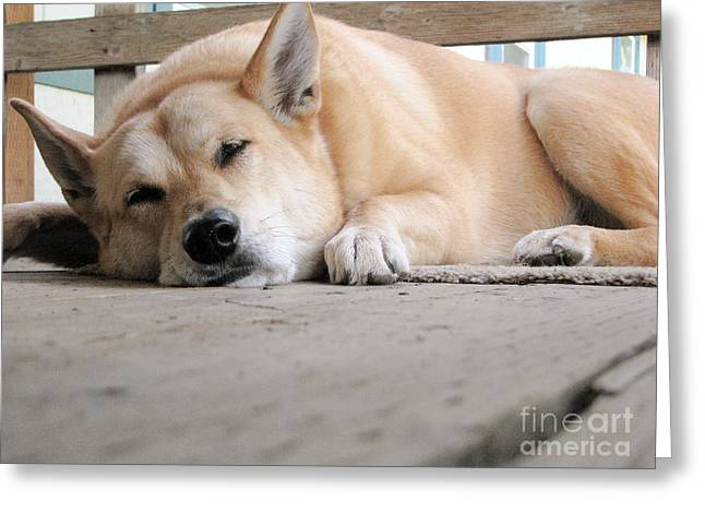 Dog Sleeping On The Porch Greeting Cards - Lazin On The Porch Greeting Card by Rory Sagner