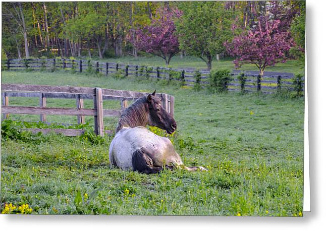Lazing Greeting Cards - Lazing on a Sunny Afternoon Greeting Card by Bill Cannon