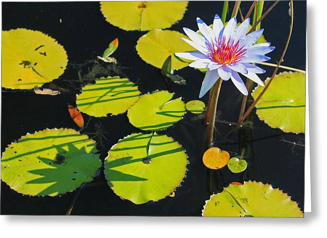 Lily Pad Greeting Cards Greeting Cards - Lazy Afternoon at the Lily Pond Greeting Card by Suzanne Gaff