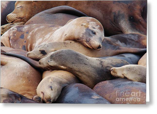 California Sea Lions Greeting Cards - Lazy Afternoon Greeting Card by Eva Kato