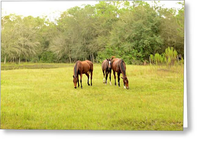Horse Farm Greeting Cards - Lazy Afternoon Greeting Card by Jon Neidert