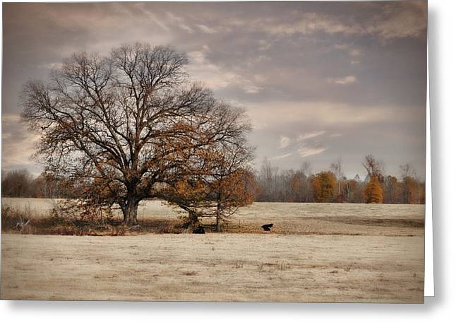 Autumn Scenes Greeting Cards - Lazy Autumn Day - Farm Landscape Greeting Card by Jai Johnson