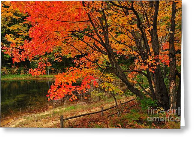 Fall Colors Greeting Cards - Lazy Autumn Greeting Card by Terri Gostola