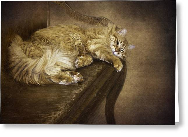 Diane Schuster Greeting Cards - Lazy Cat On A Bench Greeting Card by Diane Schuster