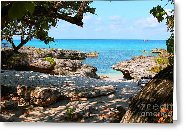 Reef Fish Photographs Greeting Cards - Lazy Cove Greeting Card by Carey Chen
