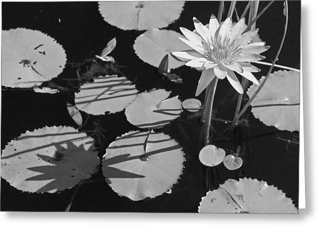 White Lotus Greeting Cards - Lazy Day at the Lily Pond in Black and White Greeting Card by Suzanne Gaff
