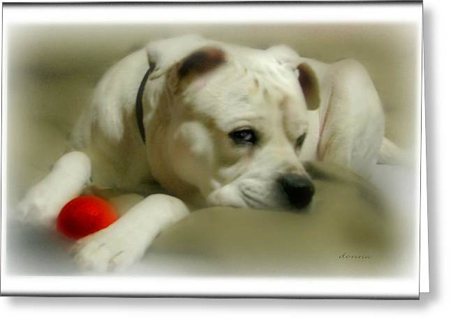 Lazy Red Dog Greeting Cards - Lazy Day Greeting Card by Donna Brown