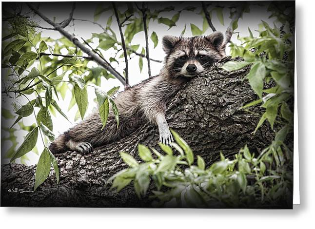 Lazy Day Greeting Card by Jeff Swanson