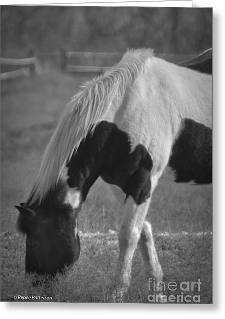 Pastureland Greeting Cards - Lazy Day Greeting Card by Renee Patterson