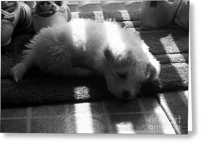 Bischon Greeting Cards - Lazy Days Greeting Card by Michael Krek