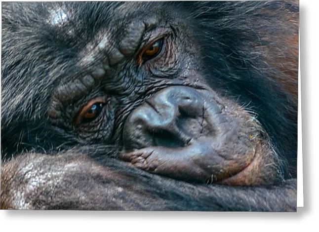 Humanlike Greeting Cards - Lazy Daze Greeting Card by Brian Stevens