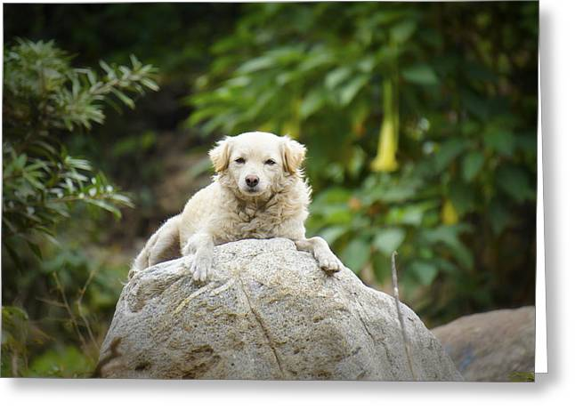 Dog Photographs Greeting Cards - Lazy Dog Greeting Card by Aged Pixel