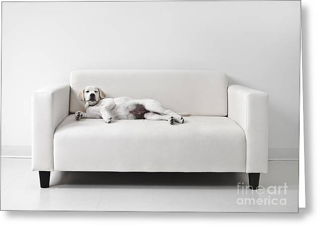 Mischief Greeting Cards - Lazy Dog on the Sofa Greeting Card by Diane Diederich