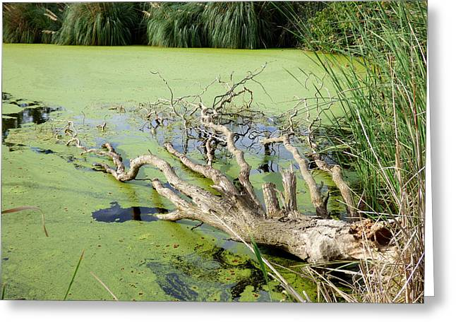 Stockton Greeting Cards - Lazy Lagoon Greeting Card by Pamela Patch