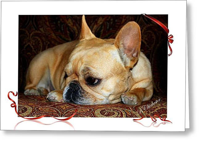 Puppy Digital Art Greeting Cards - Lazy Paisley Afternoon Greeting Card by Barbara Chichester