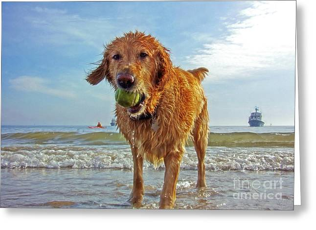 Dog Playing Ball Greeting Cards - Lazy Summer Days at the Beach Greeting Card by Nishanth Gopinathan