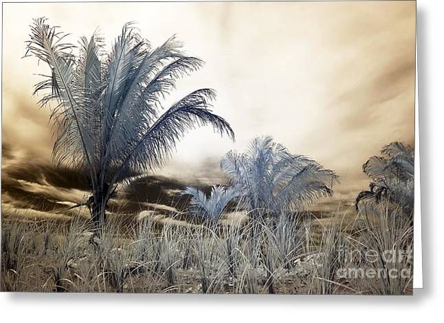 Brown Tones Greeting Cards - LBI Infrared Palms II Greeting Card by John Rizzuto