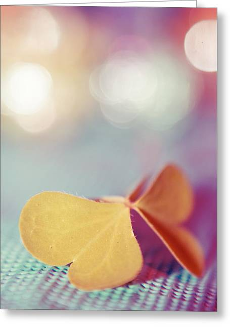 Still Life Photography Greeting Cards - Le Papillon 03 - The Butterfly 03  Greeting Card by Variance Collections
