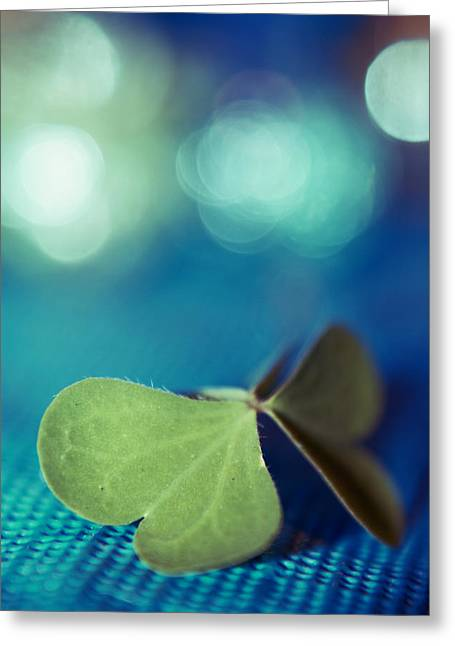 Still Life Photography Greeting Cards - Le Papillon - The Butterfly - 02a Greeting Card by Variance Collections