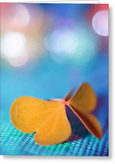 Still Life Photography Greeting Cards - Le Papillon - The Butterfly - 21 Greeting Card by Variance Collections