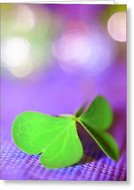 Still Life Photography Greeting Cards - Le Papillon - The Butterfly - 23 Greeting Card by Variance Collections
