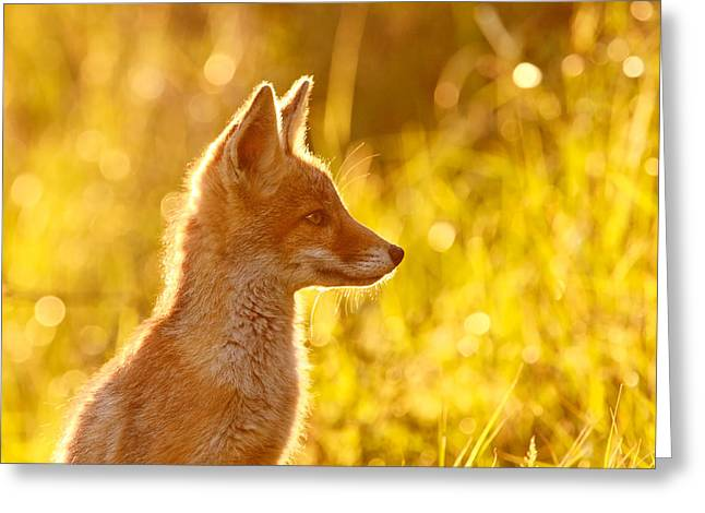 Red Fox Pup Greeting Cards - Le Ptit Renard Greeting Card by Roeselien Raimond