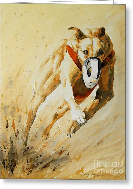 Greyhound Dog Greeting Cards - Lead Dog Greeting Card by Gary Bailey