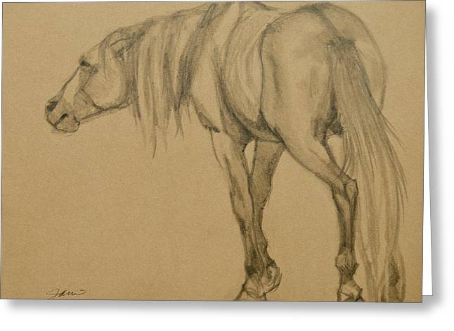 Horse Images Drawings Greeting Cards - Lead Stallion Greeting Card by Jani Freimann