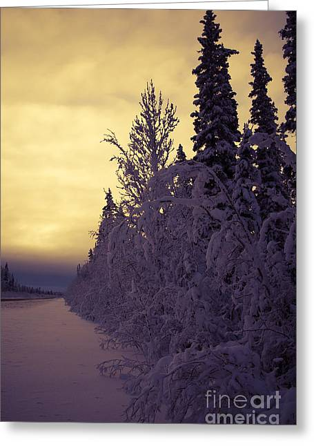 Winter Scene Digital Art Greeting Cards - Lead the way Greeting Card by Lisa Killins
