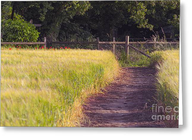 Rich Countries Greeting Cards - Leading Path Greeting Card by Svetlana Sewell