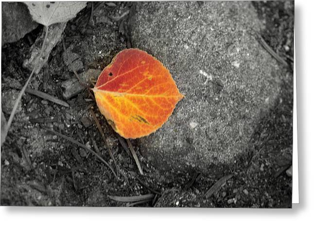Aspens In Autumn Leaves Greeting Cards - Autumn Leaf Greeting Card by Jim ODonnell