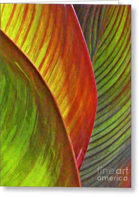 Ornamental Plants Greeting Cards - Leaf Abstract 3 Greeting Card by Sarah Loft