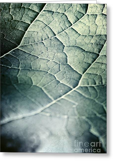 Topography Greeting Cards - Leaf Abstract Greeting Card by HD Connelly
