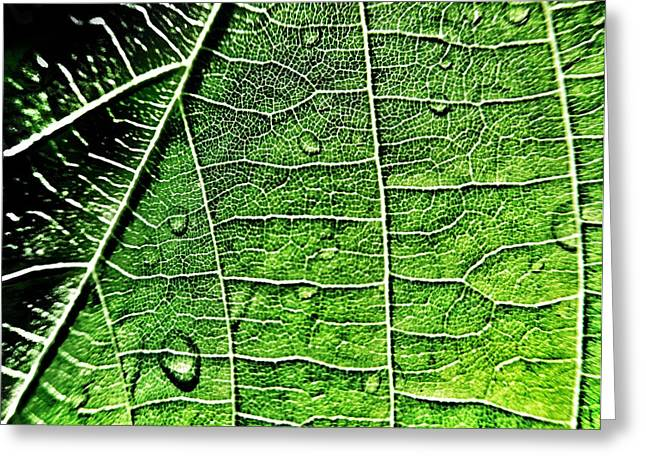 Leaf Abstract - Macro Photography Greeting Card by Marianna Mills