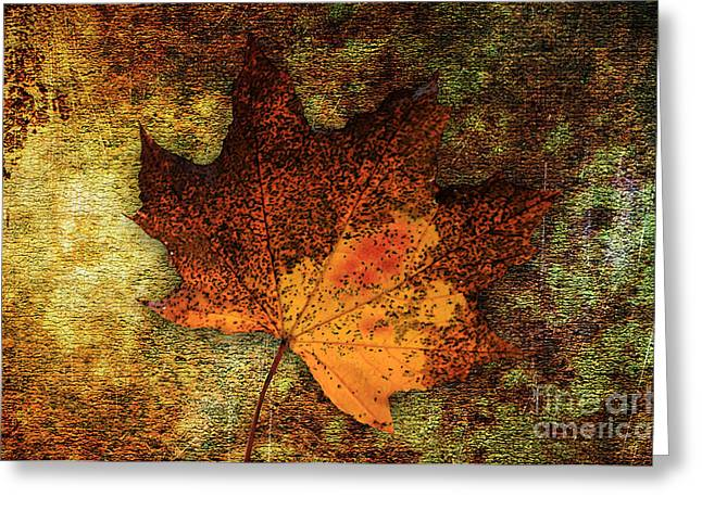 Autumn Photographs Mixed Media Greeting Cards - Leaf Abstract Greeting Card by Marvin Blaine