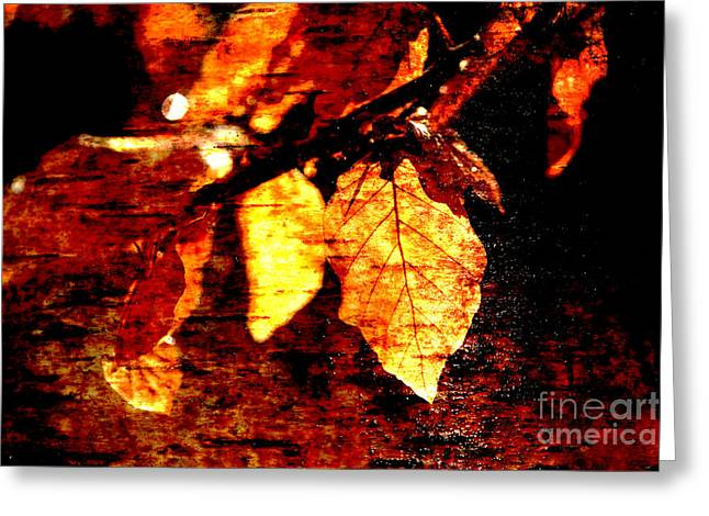 Coloured Bark Greeting Cards - Leaf and Light Abstract Greeting Card by Natalie Kinnear