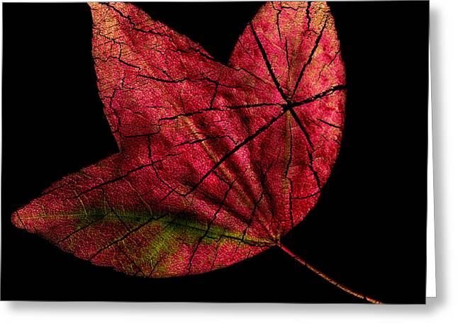 Leaf And Tree Greeting Card by Jon Woodhams