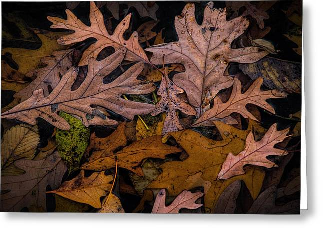 Fallen Leaf Lake Greeting Cards - Leaf Art Shapes and Patterns Greeting Card by Randall Nyhof