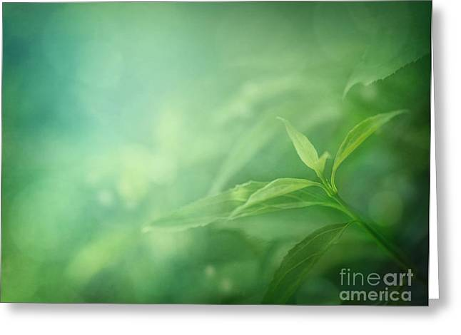 Leaf Background Greeting Card by Mythja  Photography