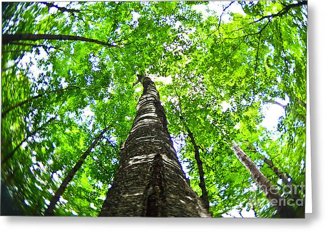 Shades State Park Greeting Cards - Leaf Canopy Greeting Card by Andrew Slater