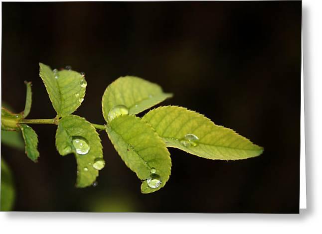 leaf Greeting Card by Cora Brum