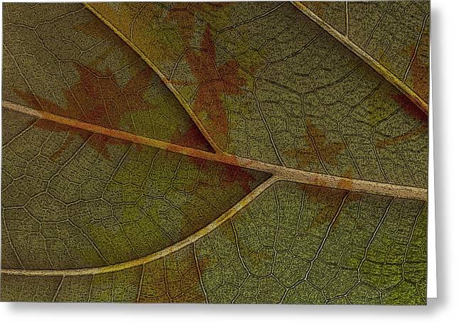 Earthtone Colored Art Greeting Cards - Leaf Design I Greeting Card by Ben and Raisa Gertsberg