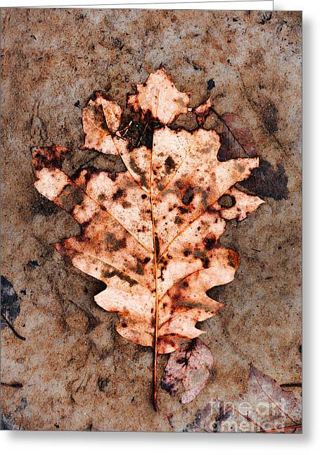Natural Textures Greeting Cards - Leaf Greeting Card by HD Connelly