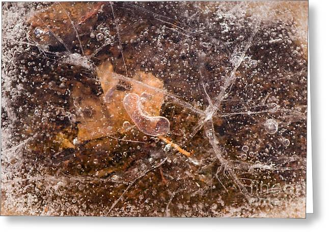 Leaf In Ice Greeting Card by Anne Gilbert