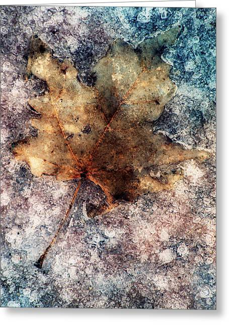 Warn Tones Greeting Cards - Leaf In Ice Greeting Card by Jack Daulton
